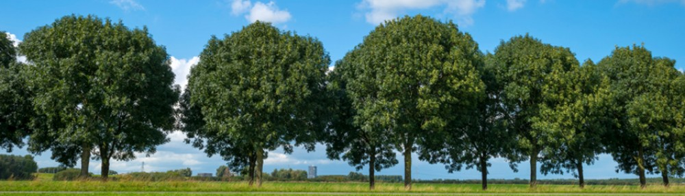 Green Leaf Tree Services